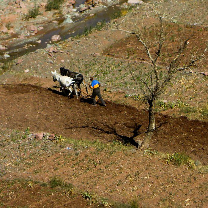 Marokko: Bio spielt eine Nebenrolle