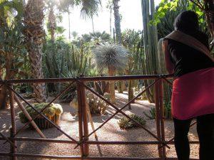 Ein erster Blick in den Jardin Majorelle