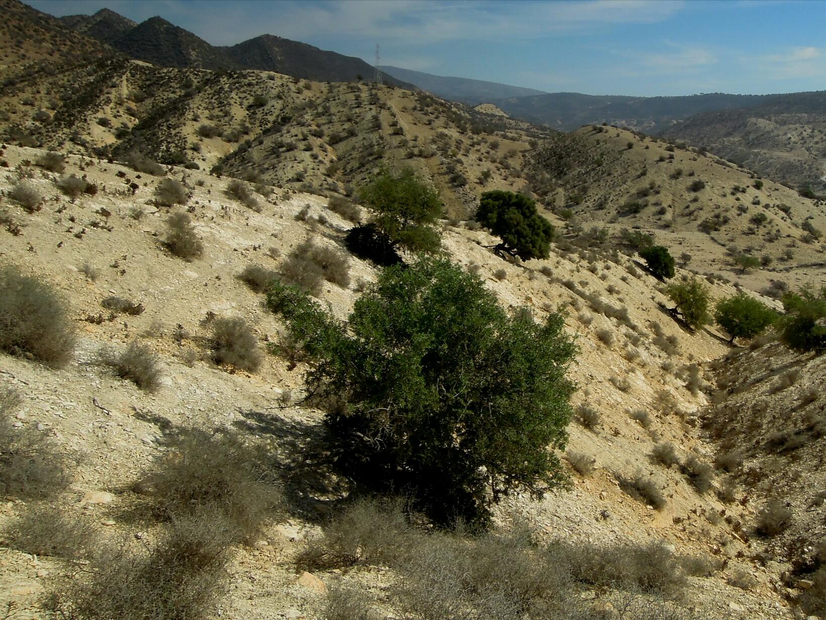 Mehrere Bäume sind irgendwie noch kein Wald.