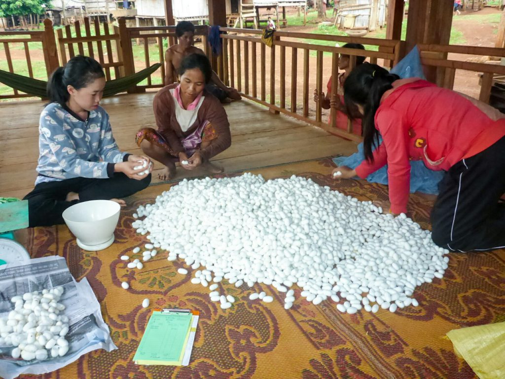 Seide silk Kokon cocoon Seidenproduktion Mai Savanh Lao organic17