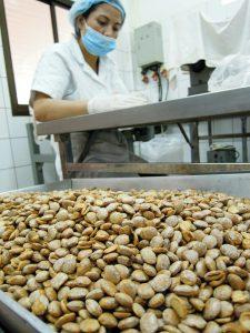 Bergnuss Sacha Inchi Endsortierung Mai Savanh Lao organic17
