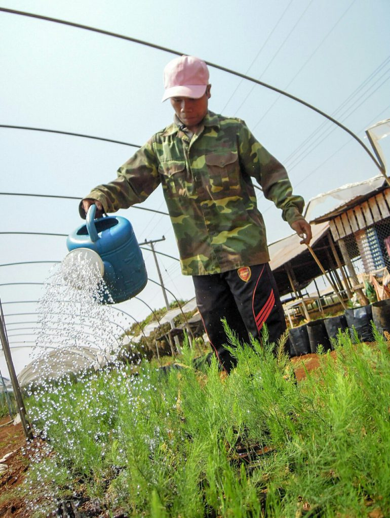 Spargel Jungpflanze Taniyama organic17