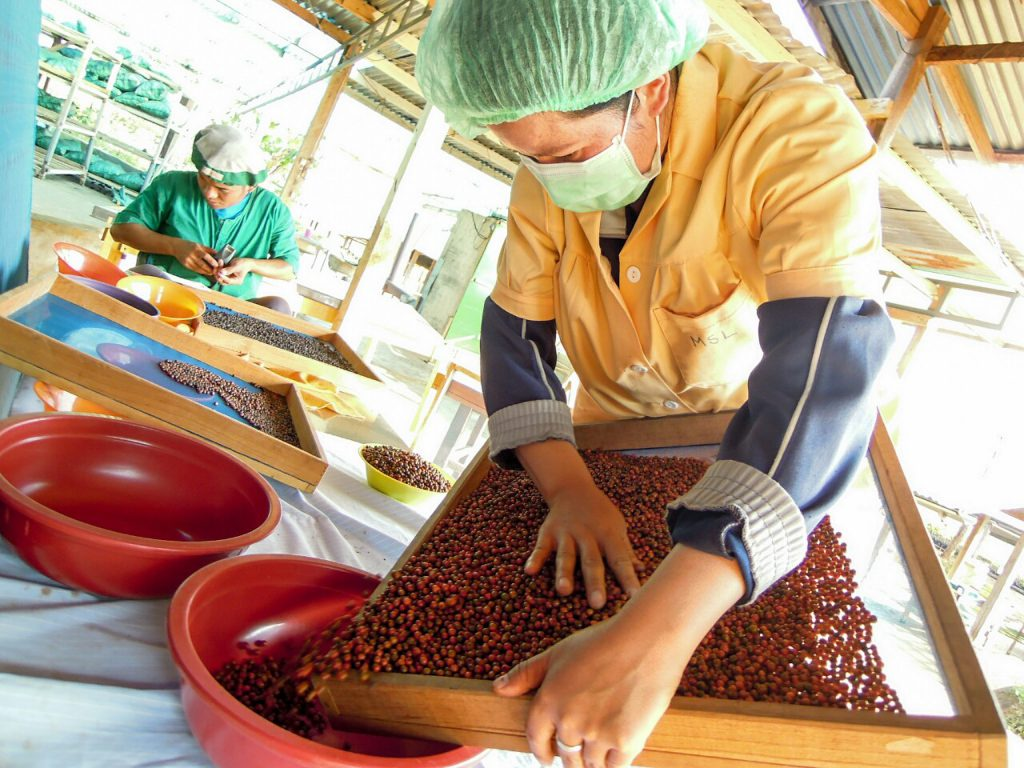 Roter Pfeffer Bio Sortierung Mai Savanh Lao