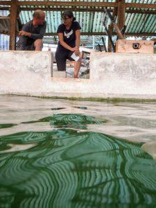 Spirulina Michael Schneider Mai Savanh Lao organic17
