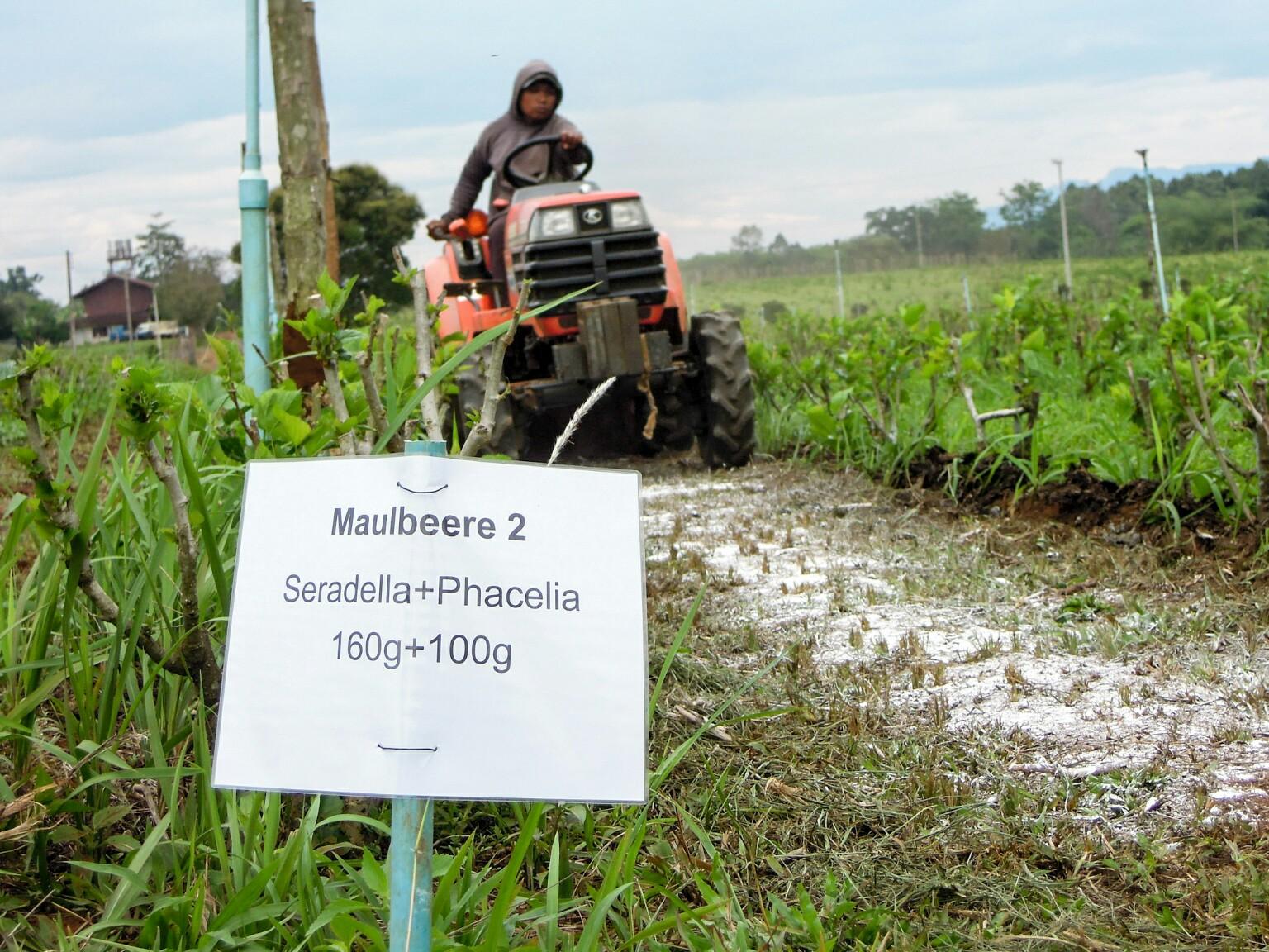 Leguminosen Gründüngung Laos organic17