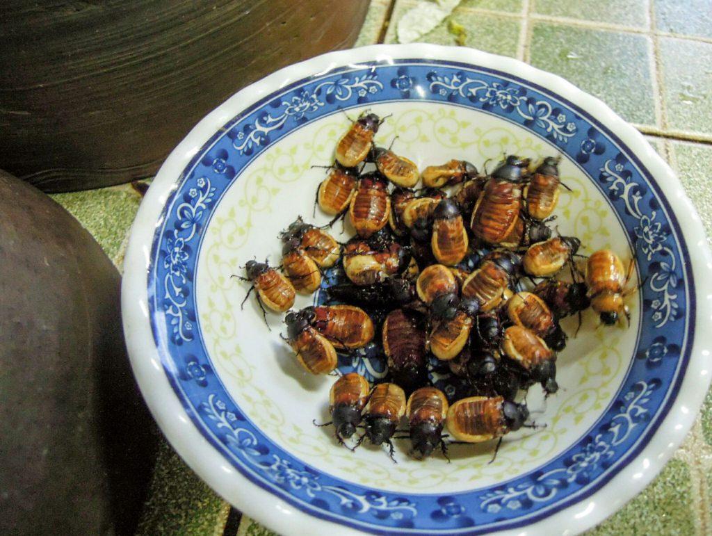 Käfer frittiert Insekten Essen Laos kulinarisch
