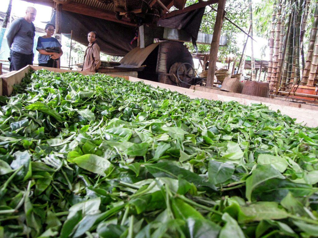 Grüntee grüner Tee organic CPC Bolaven Laos