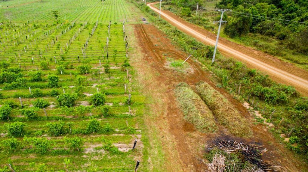 Komposthaufen Kompostmiete Unkrautgras Laos