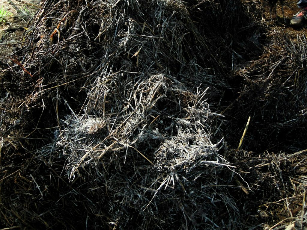 Komposthaufen Verpilzung Laos