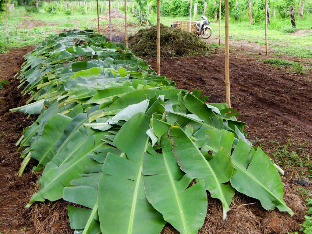 Komposthaufen Abdeckung Bananenblätter Laos