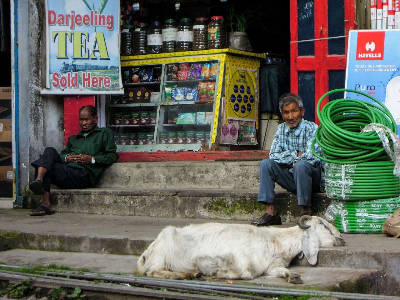 Relaxte Ziege an der Hauptstraße