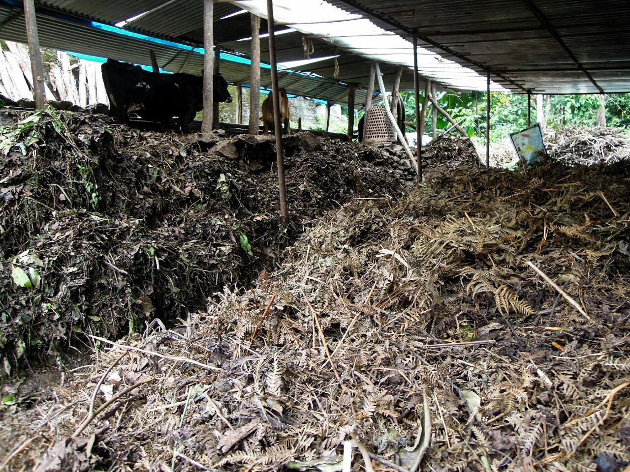 Kompost aus Rinderdung auf Biobetrieben (c) Reinhard Gessl