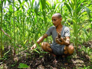 Biobetrieb Khatiwoda Ingwer im Mais (c) Reinhard Gessl