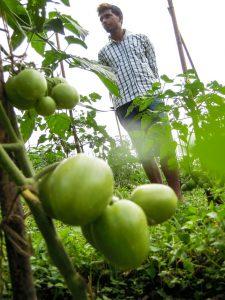 Biobetrieb Bimal Basnett in Upper Bhaluthang (c) Reinhard Gessl