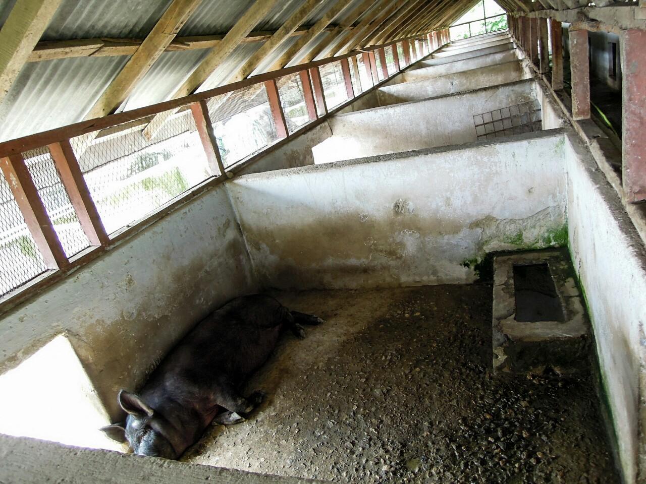 Schweinezuchtbetrieb in Geyzing (c) Reinhard Gessl