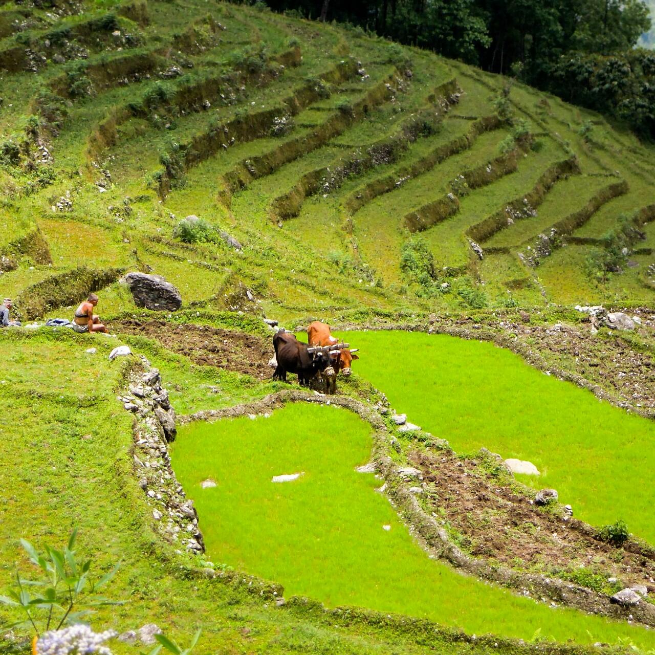 Biobauern Landwirtschaft West Sikkim (c) Reinhard Gessl