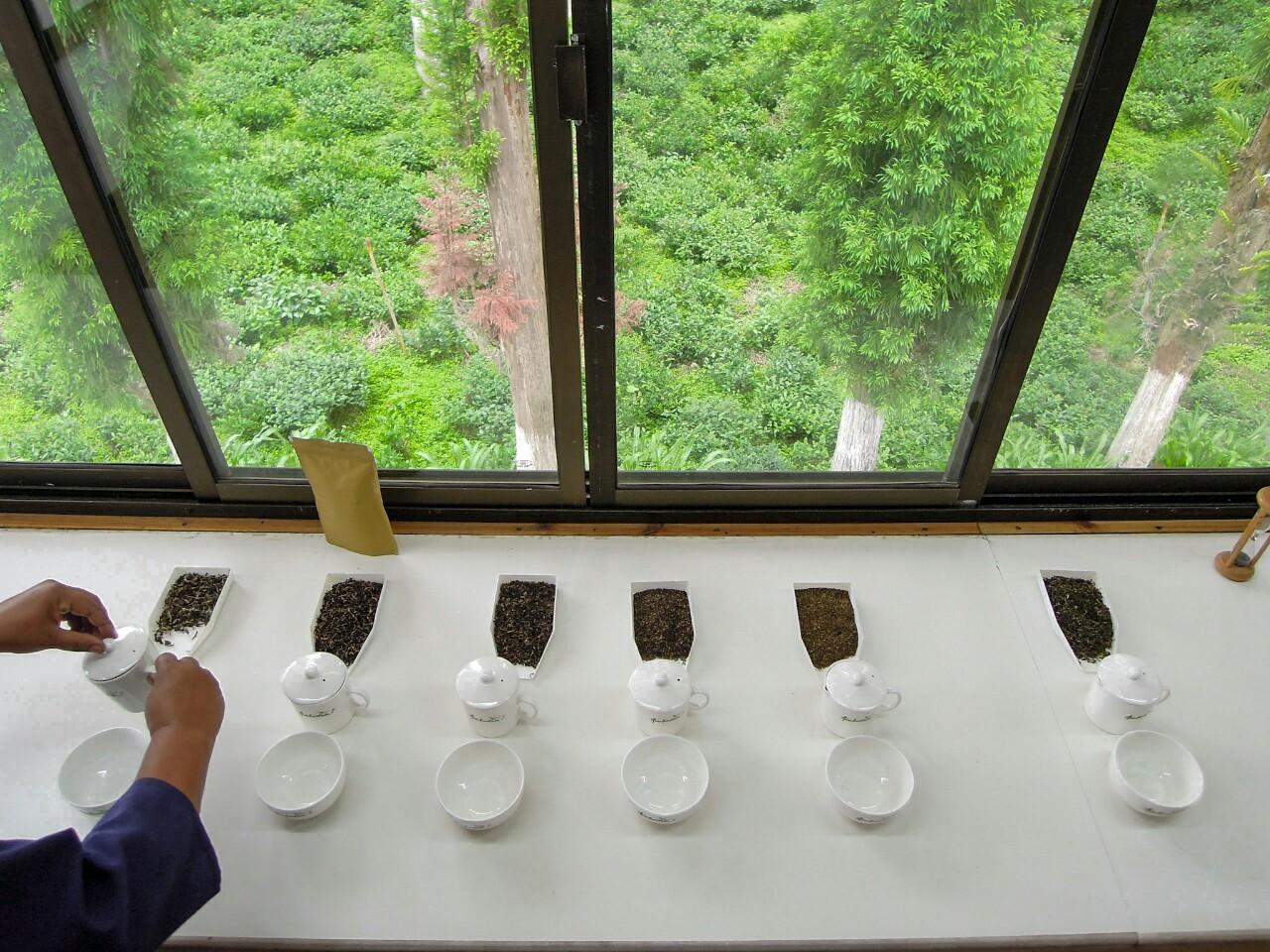 Ambootia biodynamisch Teeverkostung (c) Reinhard Gessl