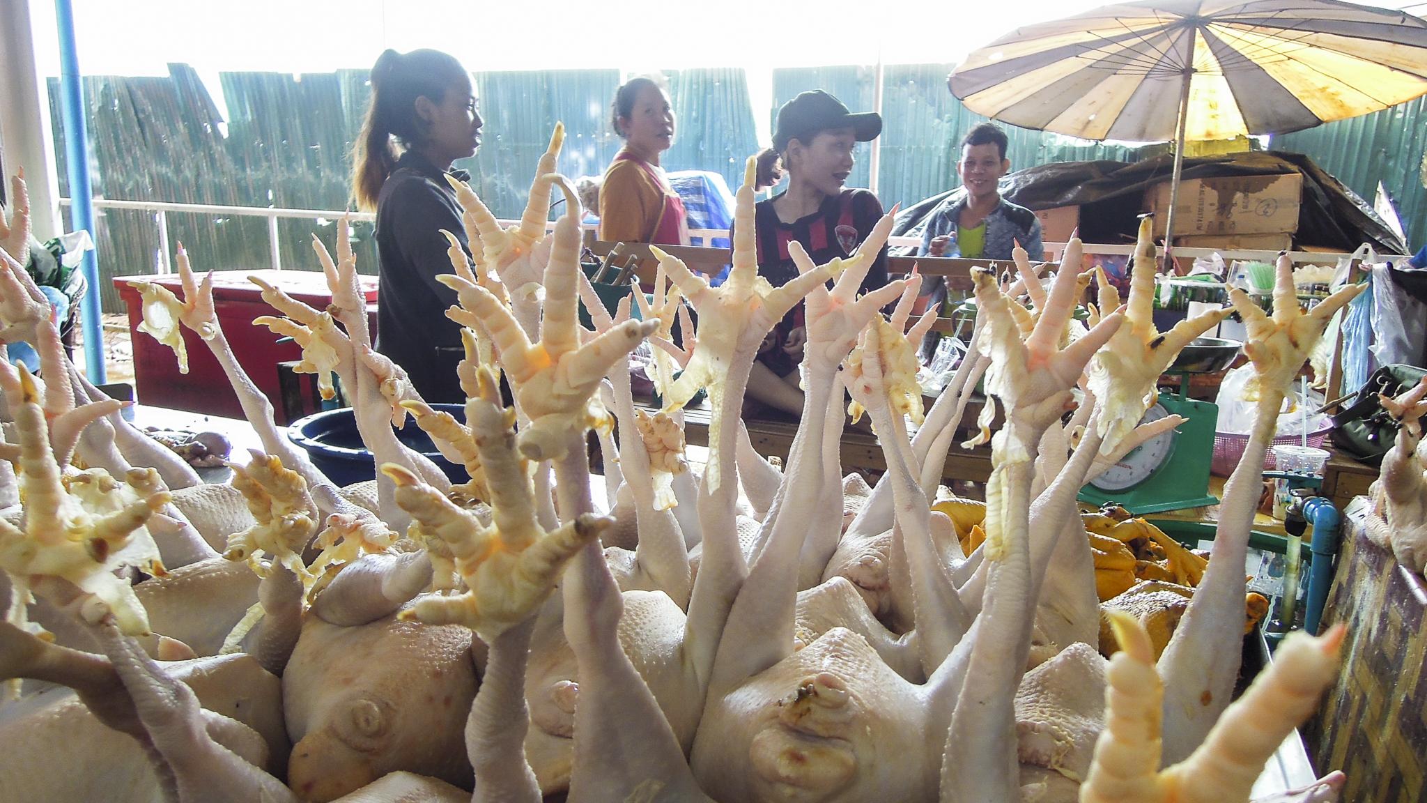 Laos Markt Hühner Hygiene Forschungs-Sabbatical organic17