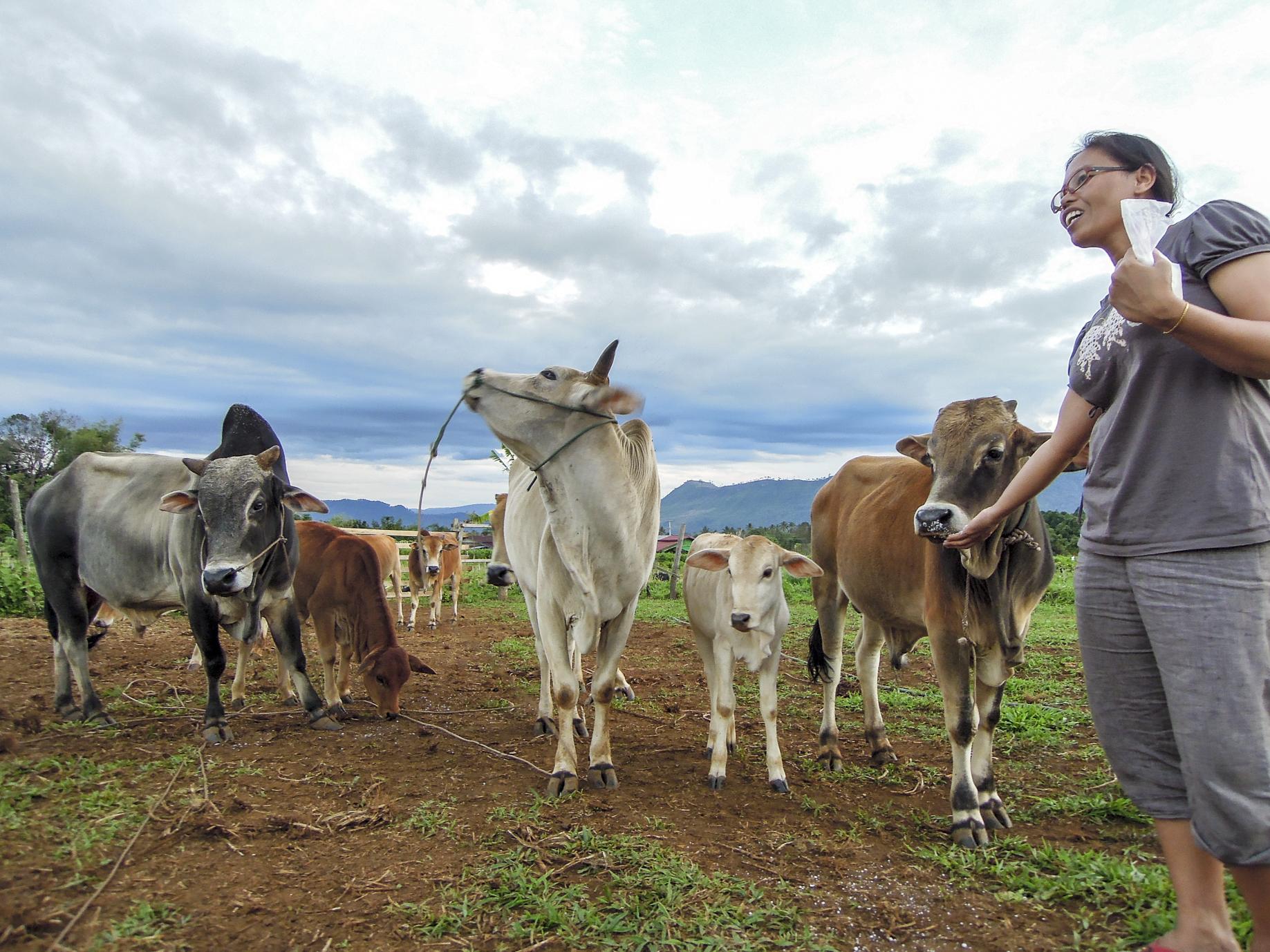 Laos, Rinder, Mai Savanh Lao, Sabbatical, organic17