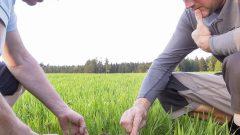 Boden aufbauen, Spatenprobe, organic17
