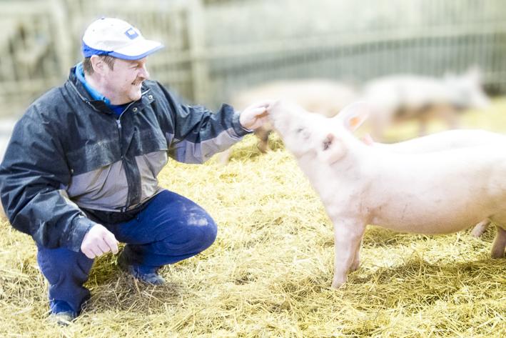 Bio-Schnitzel, Biohof Mitteregger, Bio-Schwein, organic17