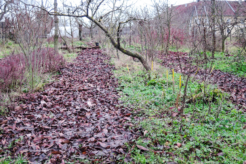 Waldgarten Mulch Laubmulch