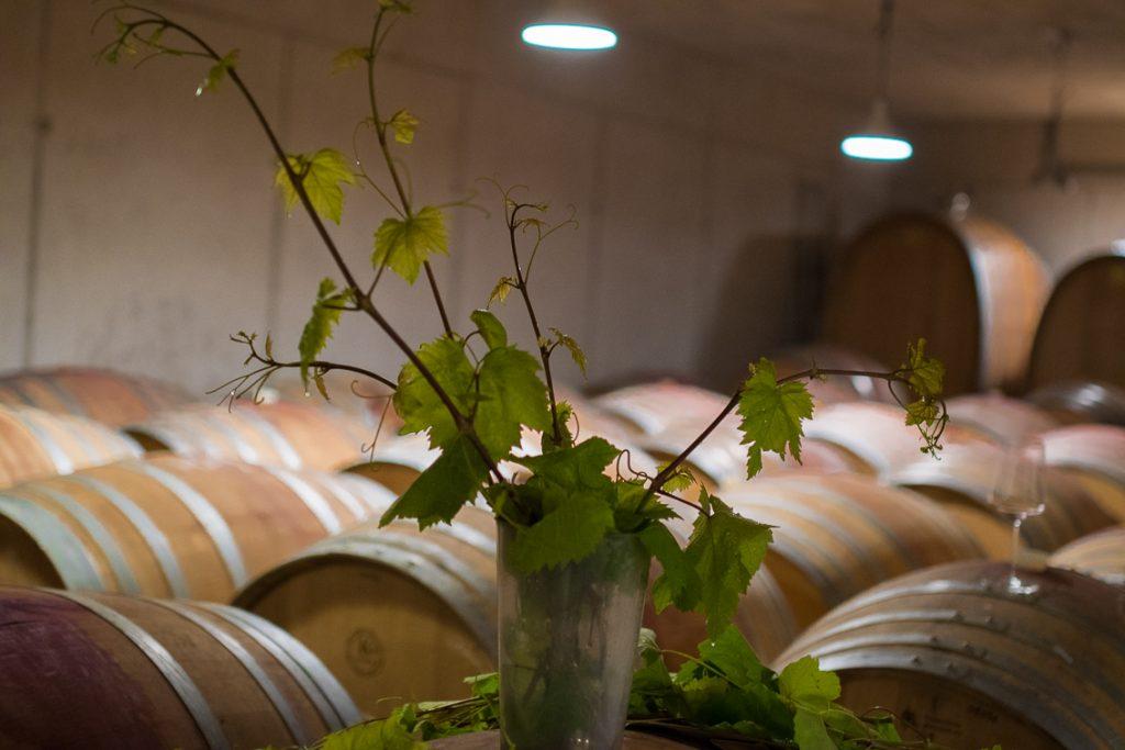 Weinblätter, Weinkeller, Bio-Wein, Rotweinfässer, Weninger, (c) organic 17 Reinhard Gessl