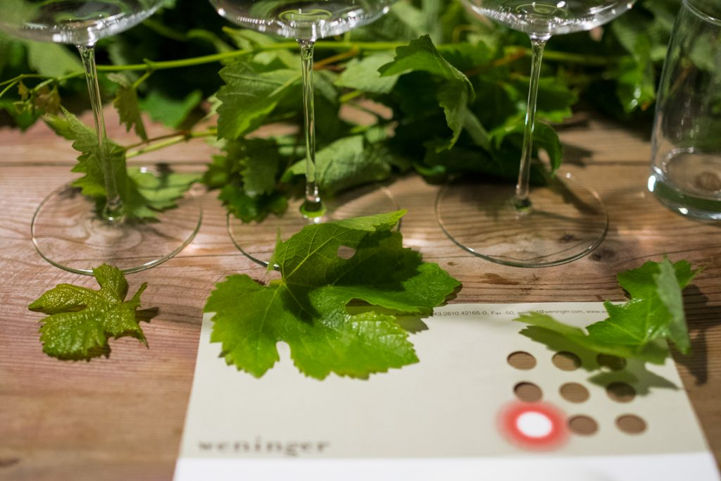 Weinblätter, Kalkofen, Dürrau, Steiner, Weingut Weninger, Verkostung, (c) organic17 Reinhard Gessl